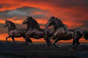 ER7006- FANTASY HORSES-Sunset