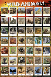 ER5782  WILD ANIMALS COLLECTION