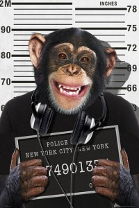 ER5865 CHIMP MUGSHOT