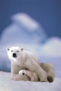2400-1198 Polar Bear and Baby