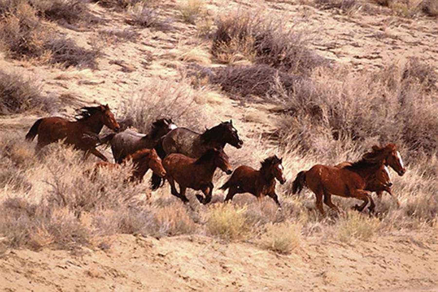 Mustang Horses Running, Wyoming - Athena Posters