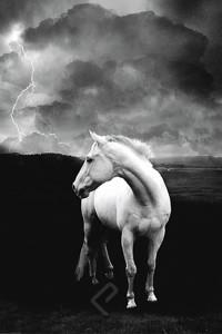 2400-1225 White Horse