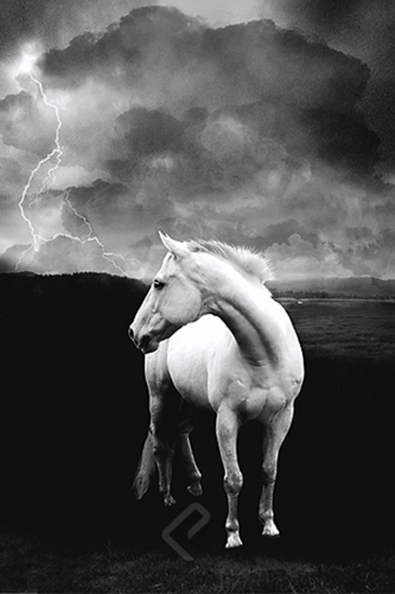2400 1225 white horse