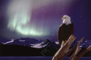 2400-1229 Eagle, Aurora Beorealis