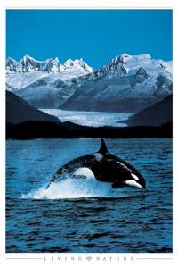 2400-4728 Orca