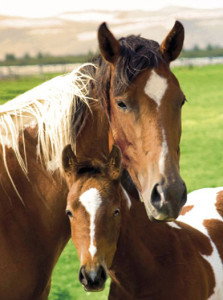 ER5575 HORSES Mare and Foal