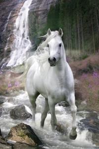 ER5827 HORSE Waterfall