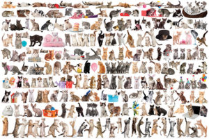 1700-0580-World of Cats-36x24