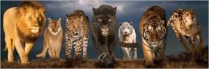 2390-0297-Big Cats-36x12