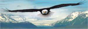 2390-0302-Eagle-36x12