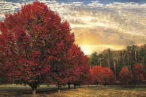 50046 Crimson Trees 18x12