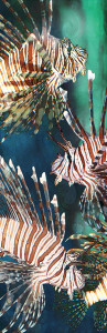 2390-62563-Lion Fish-11.75x36