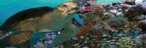 2390-62590-Sea Turtle I-11.75x36