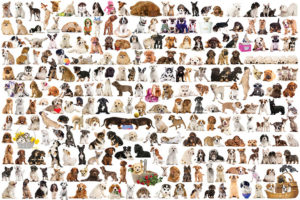 2400-0581-The World of Dogs-36x24