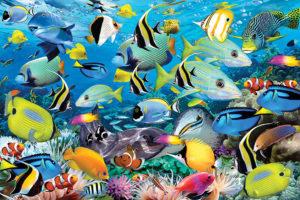 2400-0625-Ocean Colors-36x24