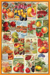 2400-0818-Fruits - Smithsonian Seed Catalogue Collection-24x36
