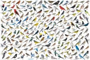 2400-0821-The World of Birds-36x24