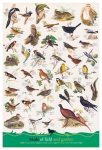2400-1259-Birds Fields and Gardens-24x36