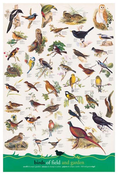2400-1259-Birds Fields and Gardens-24×36