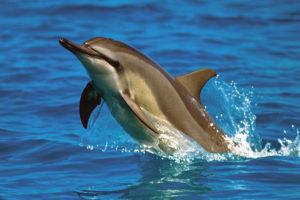 2400-3005-Dolphin-24x36