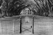 2400-399011-Oak Alley Plantation, Louisiana-24x36