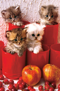 2400-4674-Kitten in Pot-24x36