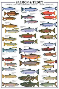 2450-0311-Salmon and Trout-24x36