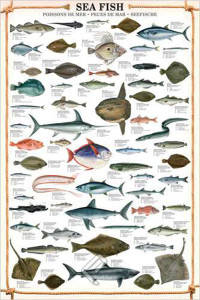 2450-0313-Sea Fish-24x36