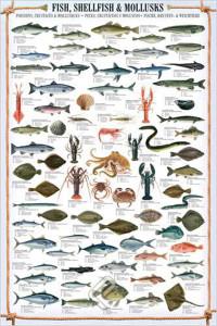 2450-0314-Fish Shellfish and Mollusks-24x36
