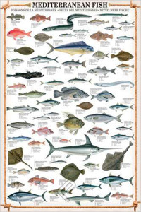 2450-0315-Mediterranean Fish-24x36