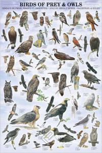 2450-0316-Birds of Prey and Owls-24x36