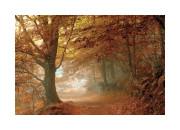 16122 Autumn Dream