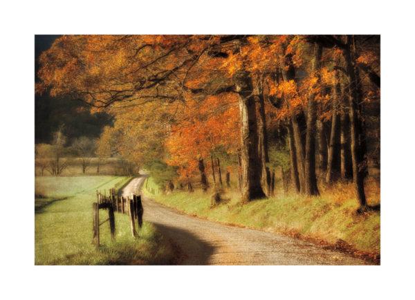 16382 Autumn's Morning Light
