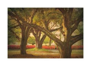 16430 Three Oaks and Azaleas