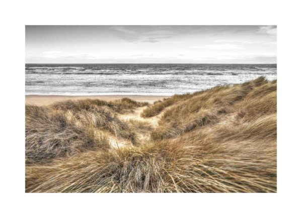 16649 Beach Dunes