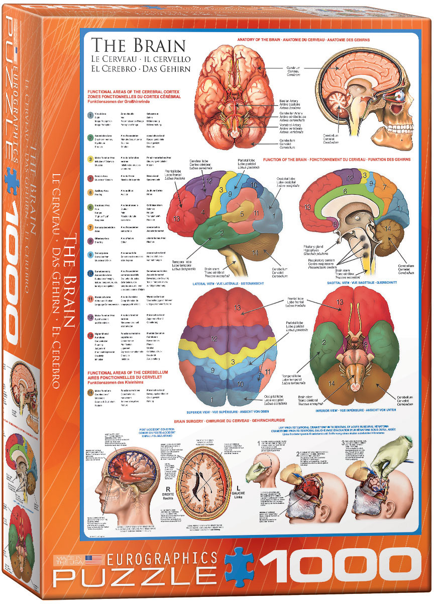 The Brain 1000 Piece Puzzle - Athena Posters