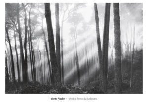 NMP326 Mystical Forest & Sunbeams