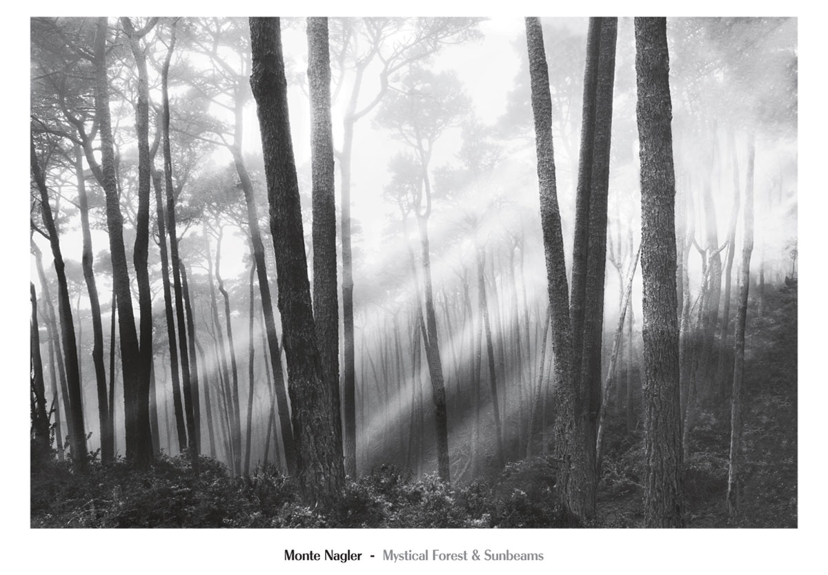 Nmp326 mystical forest sunbeams