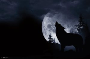 RP15699 Wolf Howl