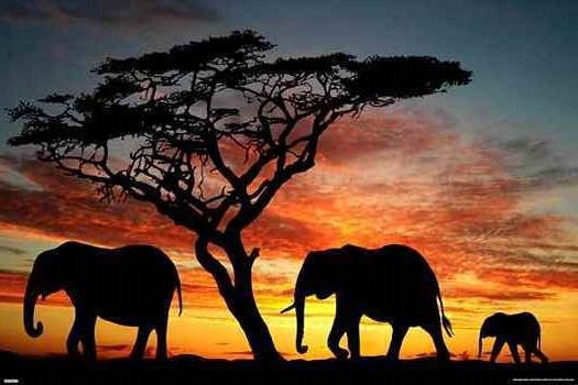 elephants-african sunset