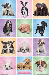 RP14199 Puppies - Cuties