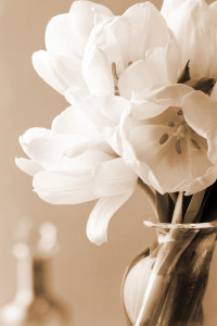 2400-61742-Tulips In Sepia-24x36