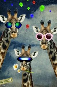 RP14473-Giraffe - Selfie