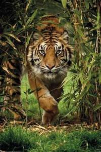 ER7639 Tiger Bambo