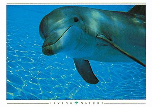 Dolphin Curiousity