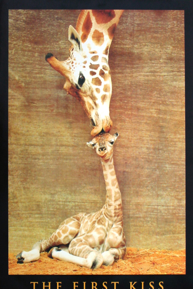 GIRAFFE-THE FIRST KISS